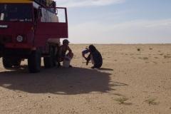 Un Pinz nel deserto